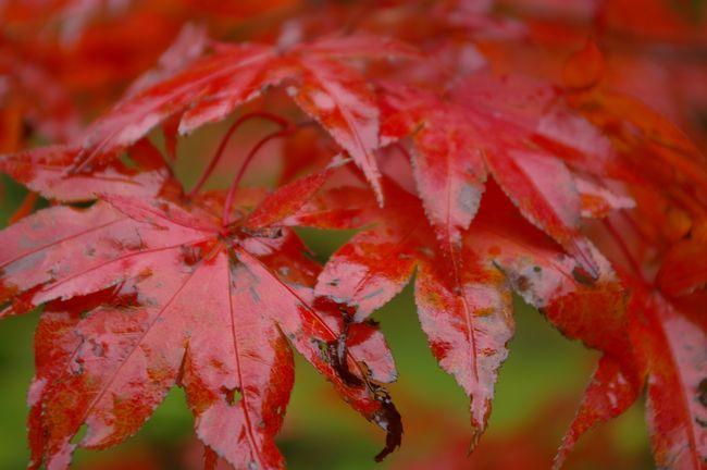 herfstbladeren2