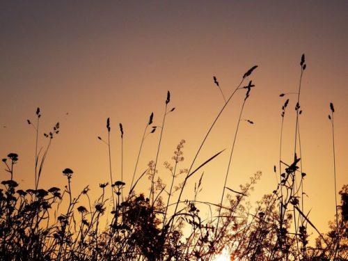 foto zonsopgang in veld van Pia Legerstee